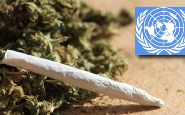 Światowa Organizacja Zdrowia domaga się dekryminalizacji narkotyków na całym świecie, UltimateSeeds.pl