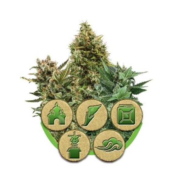 Nasiona Marihuany w Formie Auto Mieszanki, UltimateSeeds.pl