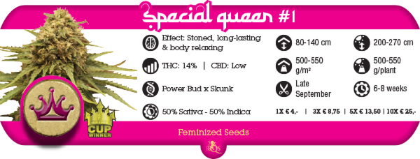 Special Queen   Nasiona, dobra jakość za niską cenę!, UltimateSeeds.pl