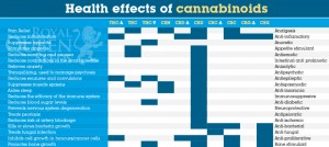 Health_effects_of_cbd