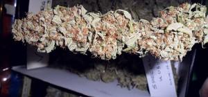 Special Kush 70-75 grams
