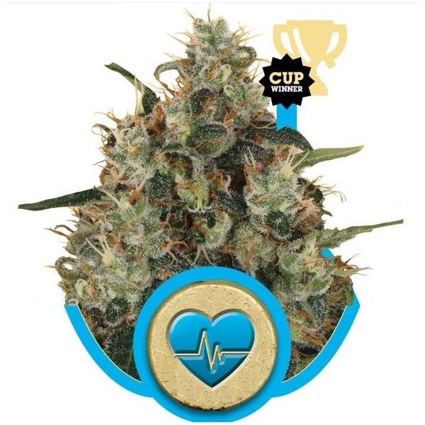 Recenzja Odmiany Medical Mass od Royal Queen Seeds, UltimateSeeds.pl