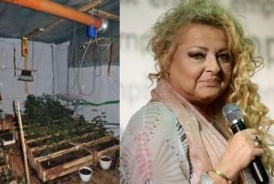 CBŚ: 170 krzaków marihuany w restauracji po rewolucji Magdy Gessler, UltimateSeeds.pl