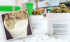 Szwajcaria: 60 procent za legalizacją, UltimateSeeds.pl