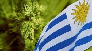 Urugwaj: Banki gardzą aptekami przez medyczną marihuanę, UltimateSeeds.pl