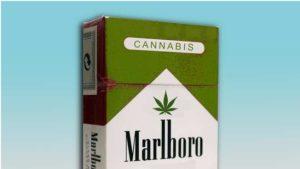 WHO być może zadecyduje o tym, że marihuana to nie narkotyk, UltimateSeeds.pl