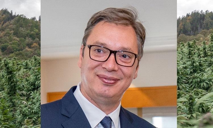 Prezydent Serbii: Samozwańcze Oskarżenie z Powodu Ponad 650kg Konopi Indyjskich, UltimateSeeds.pl